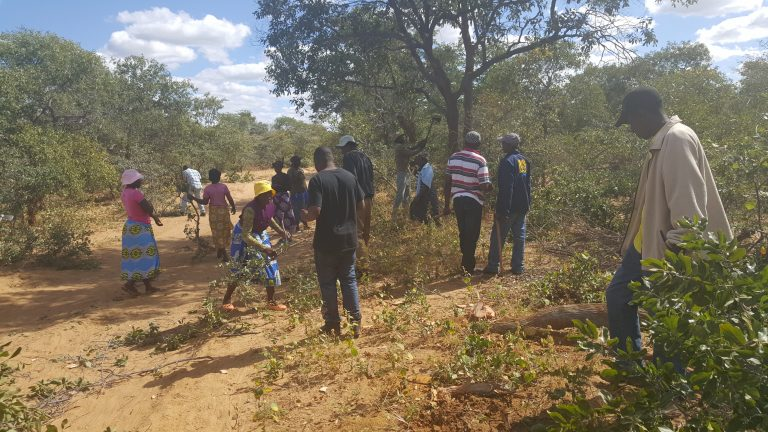 Read more about the article Tsholotsho community peace clubs strive to end water conflicts through Amalima